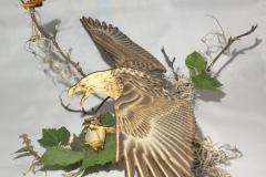 Mobile_Eagle