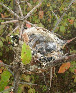 Fall Migration on southwest Missouri grasslands