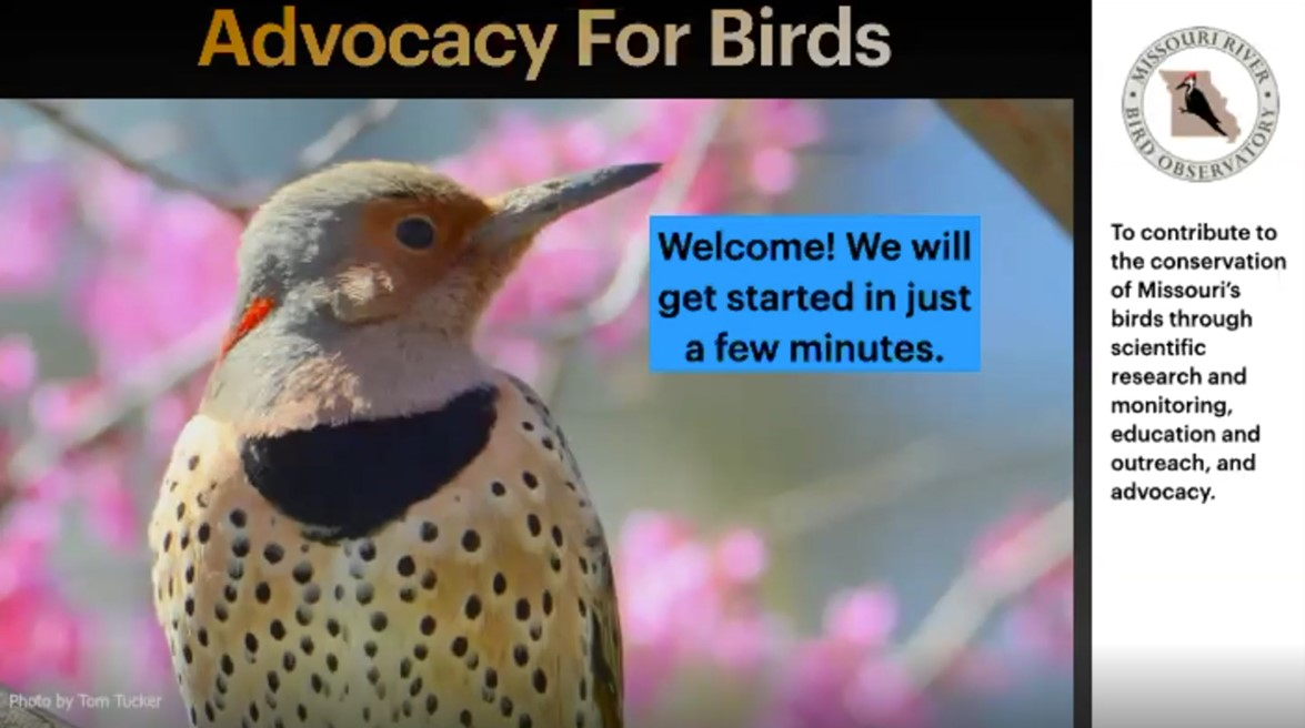 Advocacy for birds webinar cover