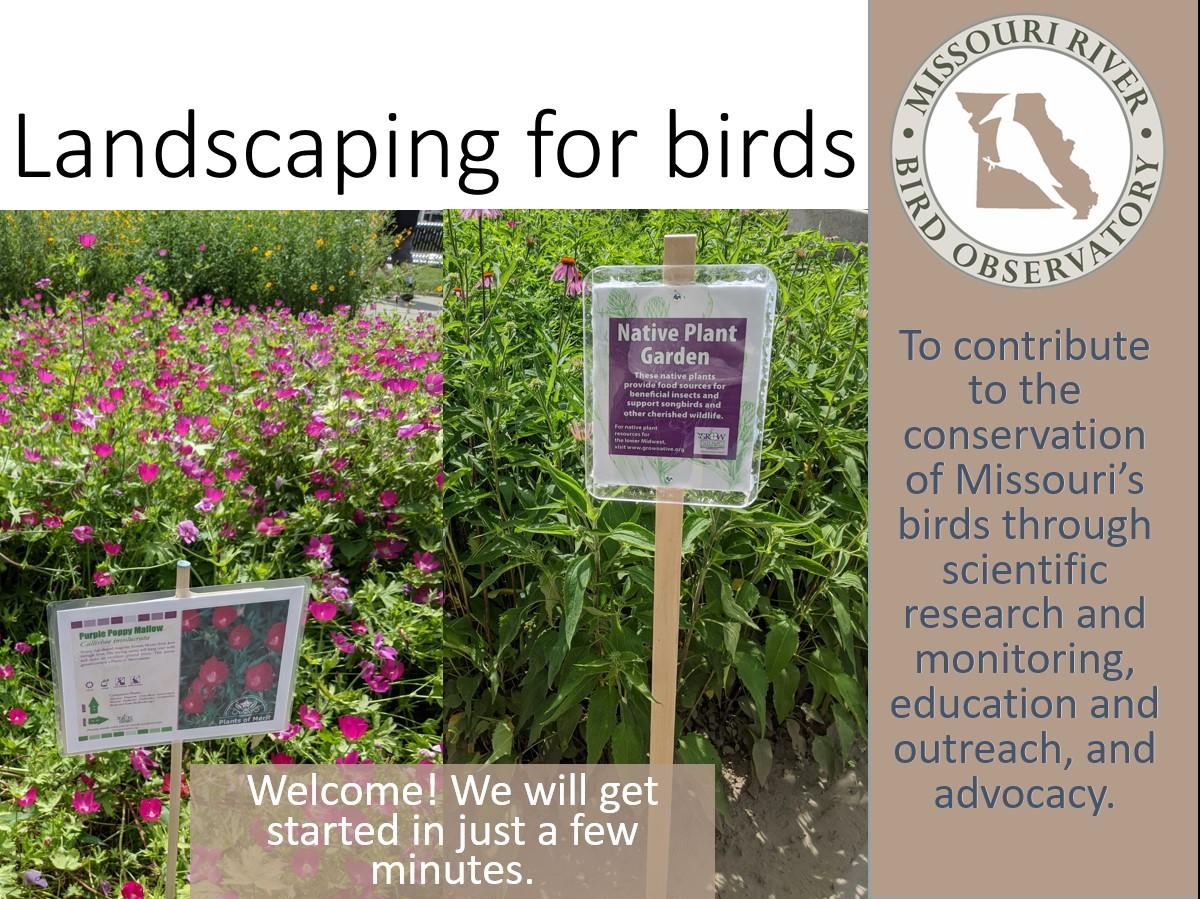 landscaping webinar cover