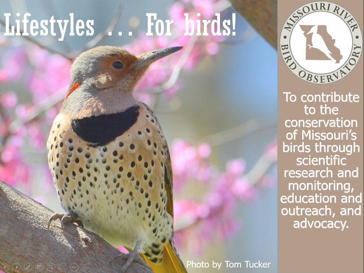 lifestyles for birds webinar cover