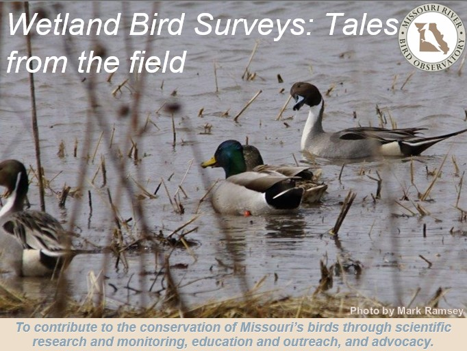 wetlands webinar cover