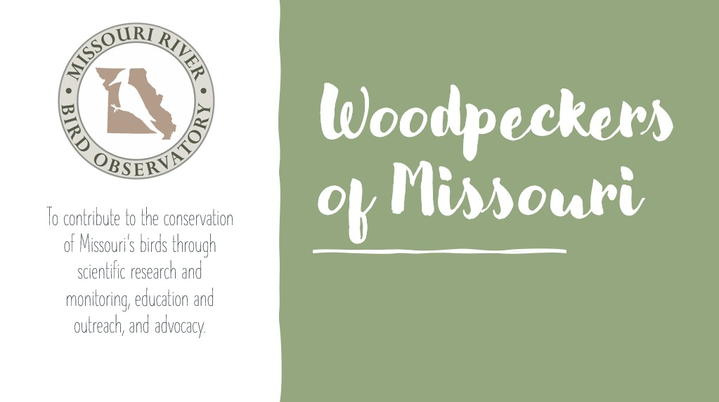 woodpeckers of MO webinar cover