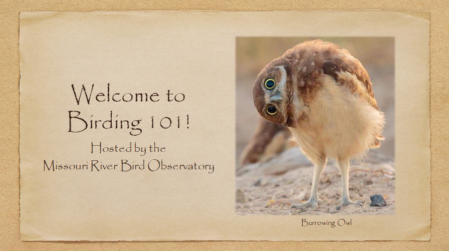 birding 101 webinar cover