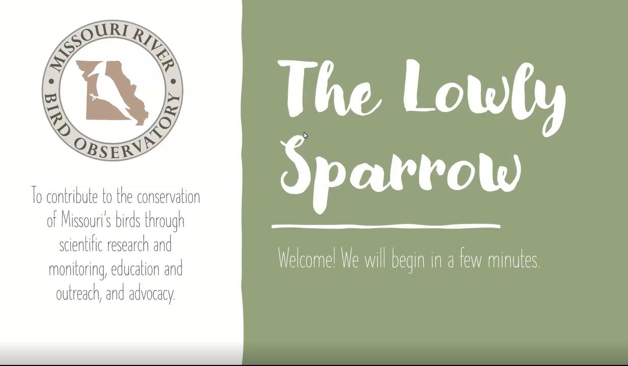 Lowly Sparrow webinar cover